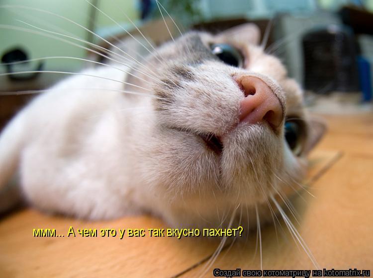 Котоматрица: ммм... А чем это у вас так вкусно пахнет?