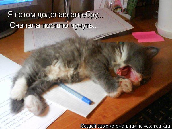 Котоматрица: Я потом доделаю алгебру... Сначала посплю чучуть.. Я потом доделаю алгебру...  Сначала посплю чучуть..