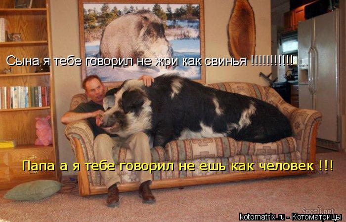 Котоматрица: Сына я тебе говорил не жри как свинья !!!!!!!!!!! Папа а я тебе говорил не ешь как человек !!!