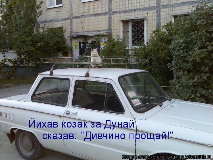 """Котоматрица: Йихав козак за Дунай сказав: """"Дивчино прощай!"""""""