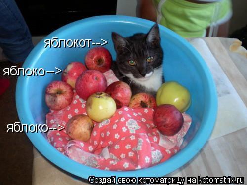 Котоматрица: яблоко --> яблоко --> яблокот-->