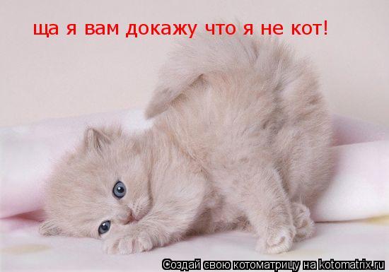 Котоматрица: ща я вам докажу что я не кот!