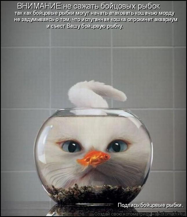 Котоматрица: ВНИМАНИЕ:не сажать бойцовых рыбок так как бойцовые рыбки могут начать атаковать кошачью морду не задумываясь о том, что испуганная кошка о