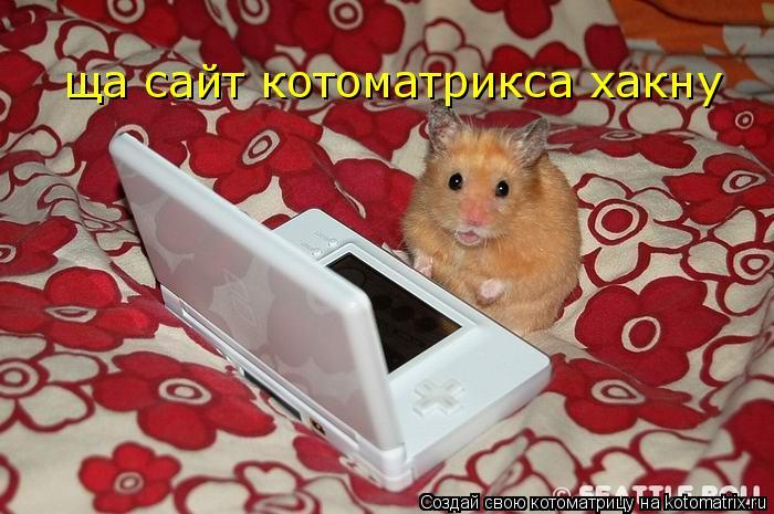 Котоматрица: ща сайт котоматрикса хакну
