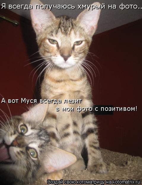 Котоматрица: Я всегда получаюсь хмурый на фото.... А вот Муся всегда лезит  в мои фото с позитивом!