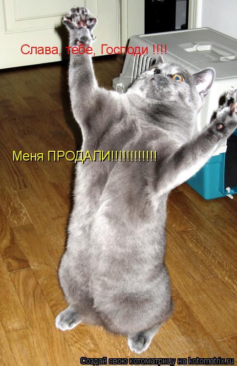 Котоматрица: Слава, тебе, Господи !!!! Меня ПРОДАЛИ!!!!!!!!!!!!