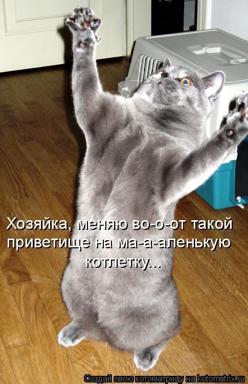 Котоматрица: Хозяйка, меняю во-о-от такой приветище на ма-а-аленькую котлетку...