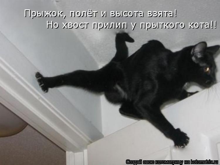 Котоматрица: Прыжок, полёт и высота взята! Но хвост прилип у прыткого кота!!
