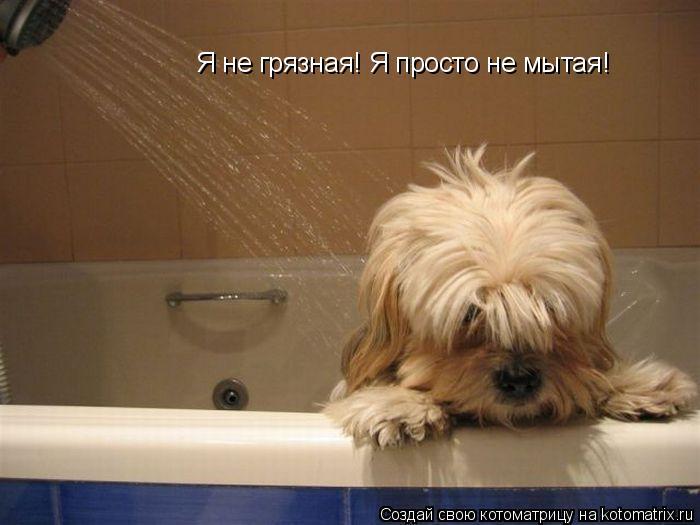 Котоматрица: Я не грязная! Я просто не мытая!