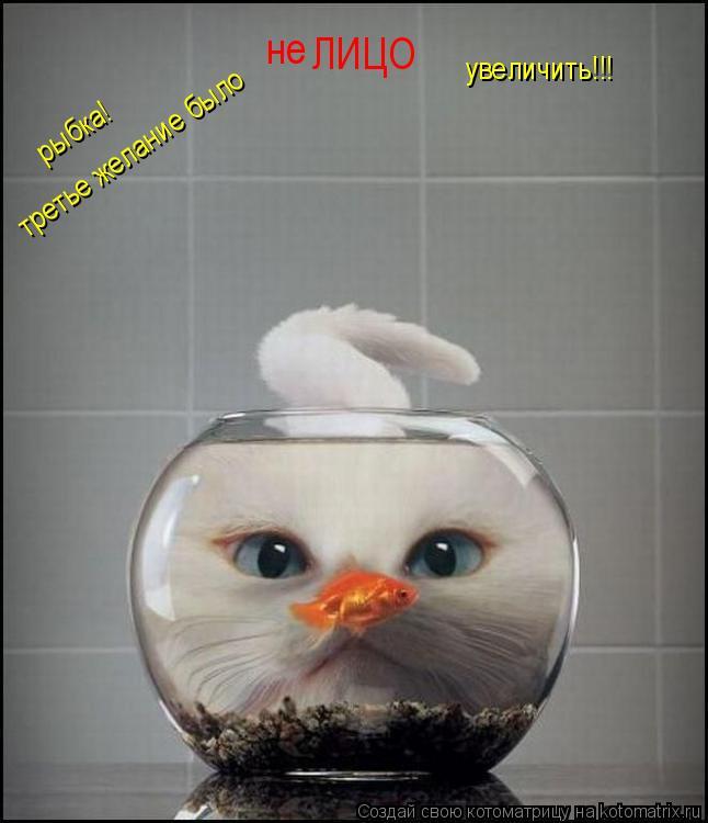 Котоматрица: рыбка!   ЛИЦО увеличить!!! третье желание было не