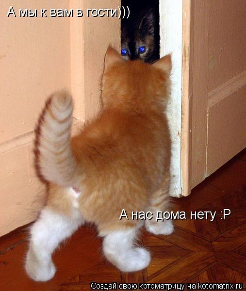 Котоматрица: А мы к вам в гости))) А нас дома нету :Р