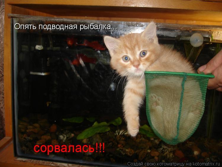Котоматрица: Опять подводная рыбалка... сорвалась!!!
