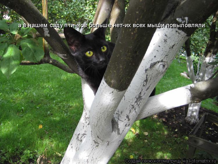 Котоматрица: а в нашем саду птичков больше нет-их всех мыши повыловляли