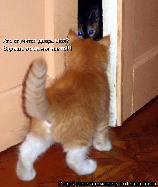 Котоматрица: Хто стучится дверь моя?  Видешь дома нет никто!!!