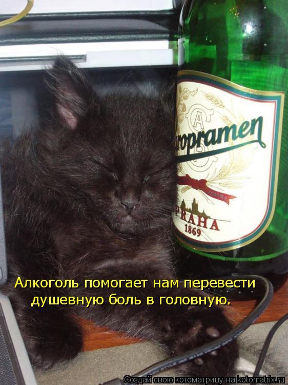 Котоматрица: душевную боль в головную. Алкоголь помогает нам перевести