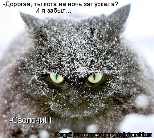 Котоматрица: -Дорогая, ты кота на ночь запускала? И я забыл... -Сволочи!!!