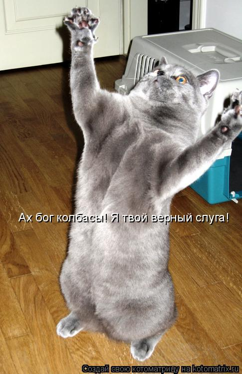 Котоматрица: Ах бог колбасы! Я твой верный слуга!