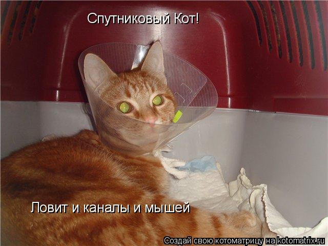Котоматрица: Спутниковый Кот!  Ловит и каналы и мышей