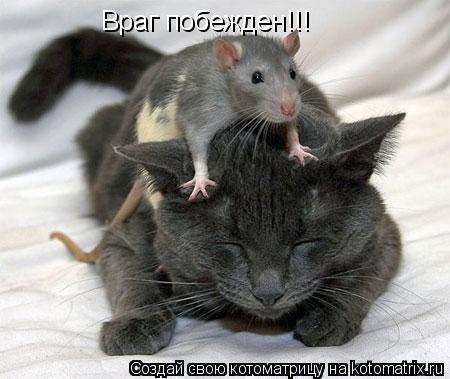 Котоматрица: Враг побежден!!!