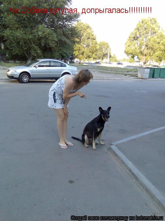 Котоматрица: Че Собака сутулая, допрыгалась!!!!!!!!!!