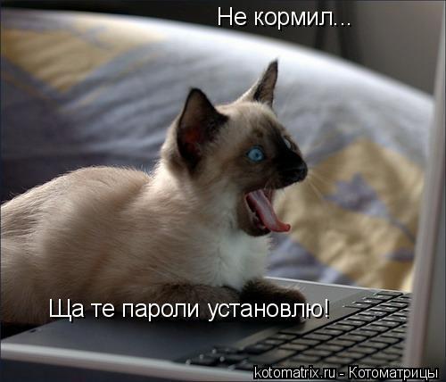 Котоматрица: Не кормил...  Ща те пароли установлю!