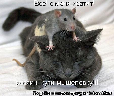 Котоматрица: Все! с меня хватит!  хозяин, купи мышеловку!!!