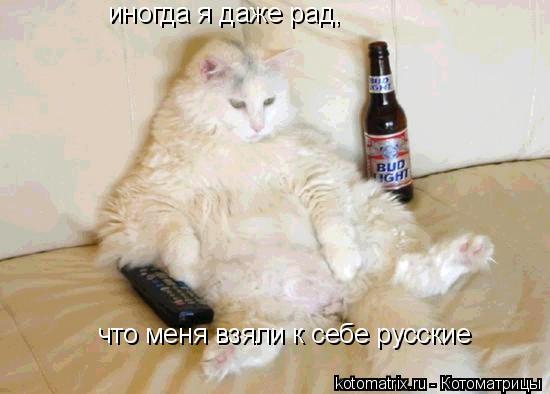 Котоматрица: иногда я даже рад,  что меня взяли к себе русские