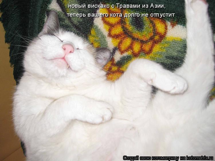 Котоматрица: новый вискакс с Травами из Азии,  теперь вашего кота долго не отпустит