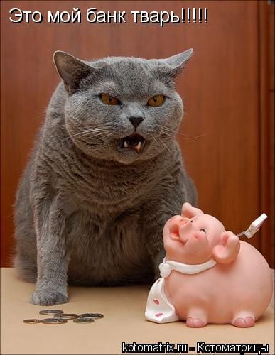 Котоматрица: Это мой банк тварь!!!!!