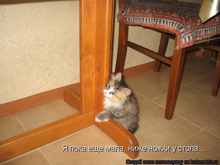 Котоматрица: Я пока еще мала, ниже ножки у стола...