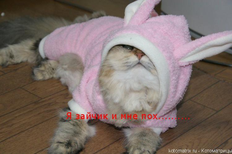 Котоматрица: Я зайчик и мне пох..........