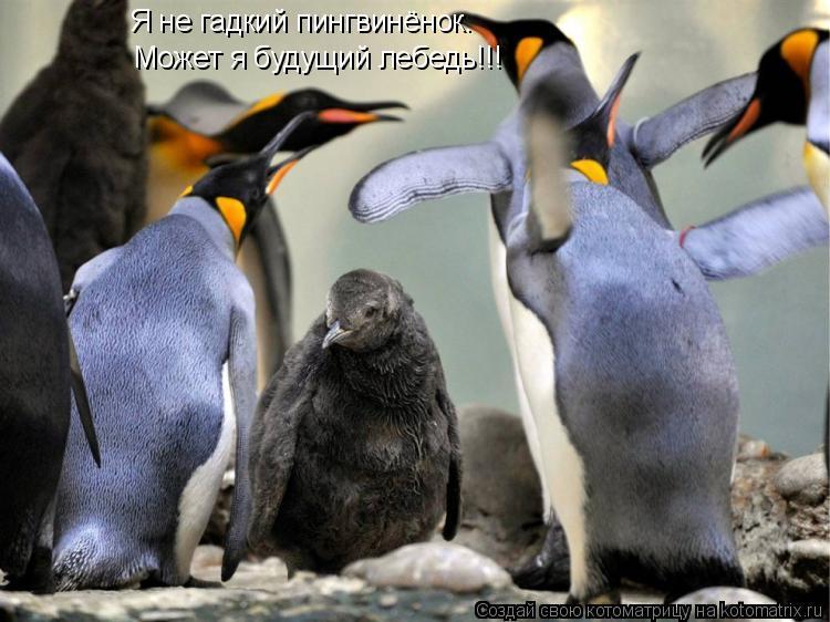 Котоматрица: Я не гадкий пингвинёнок. Может я будущий лебедь!!!