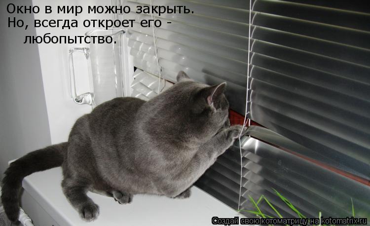 Котоматрица: Окно в мир можно закрыть. Но, всегда откроет его -  любопытство.