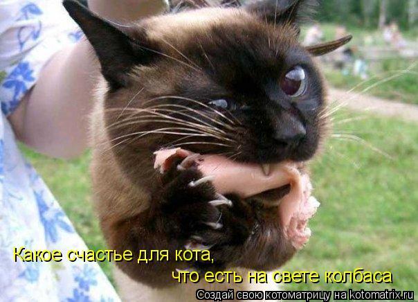 Котоматрица: Какое счастье для кота, что есть на свете колбаса