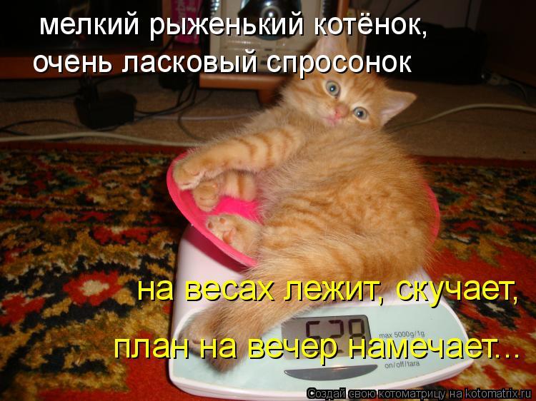 Котоматрица: мелкий рыженький котёнок, очень ласковый спросонок на весах лежит, скучает, план на вечер намечает...