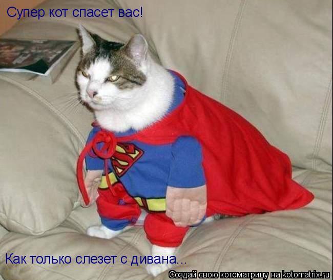 Котоматрица: Супер кот спасет вас! Как только слезет с дивана...