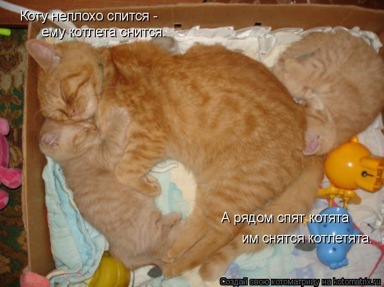 к чему снятся котята и кошка для электрических