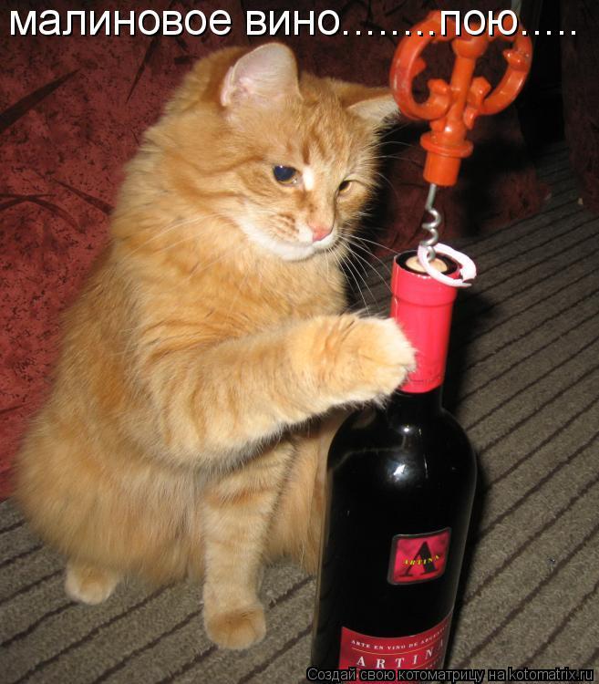 Котоматрица: малиновое вино........пою.....