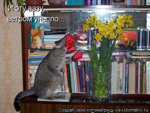 Котоматрица: И эту вазу ветром унесло...