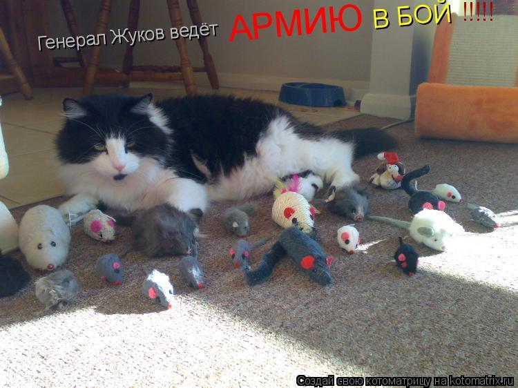 Котоматрица: Генерал Жуков ведёт  АРМИЮ В БОЙ !!!!!