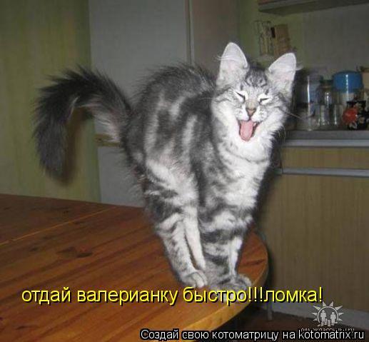 Котоматрица: отдай валерианку быстро!!!у меня ломка! отдай валерианку быстро!!!ломка!