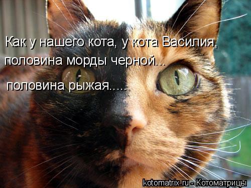 Котоматрица: Как у нашего кота, у кота Василия, половина рыжая..... половина морды черной...