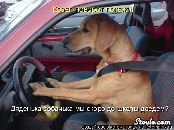 Котоматрица: Козел поворот покажи! Дяденька собачька мы скоро до школы доедем?