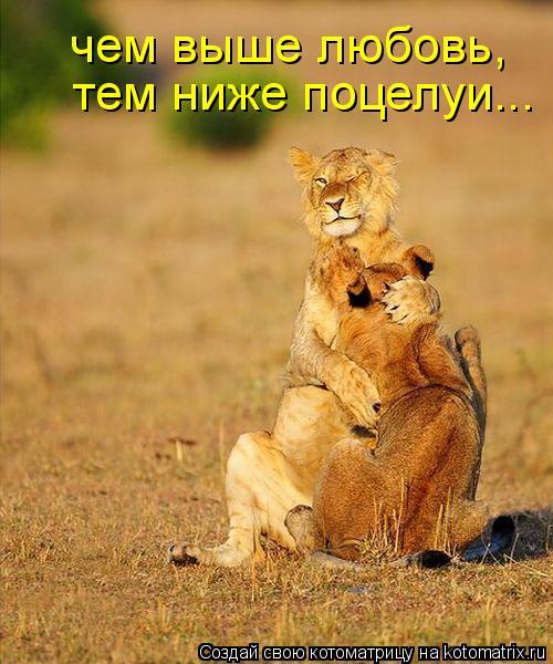 Котоматрица: чем выше любовь, тем ниже поцелуи...