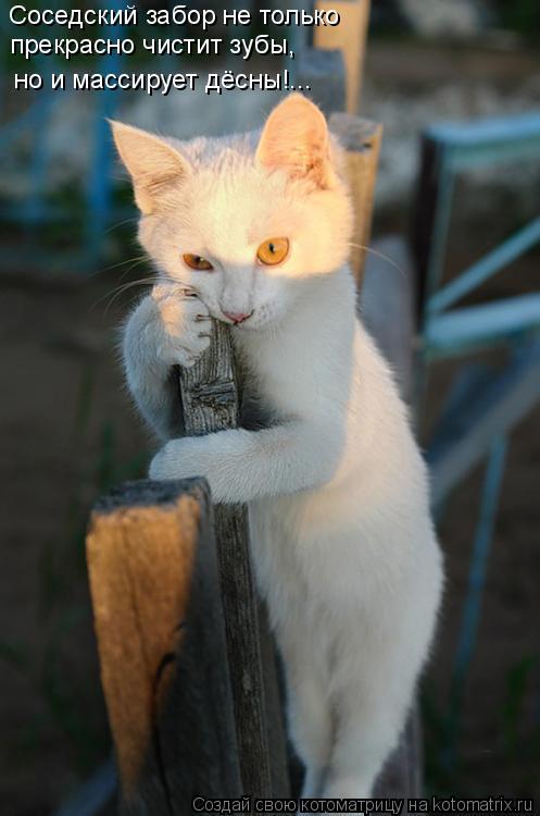 Котоматрица: Соседский забор не только прекрасно чистит зубы, но и массирует дёсны!...