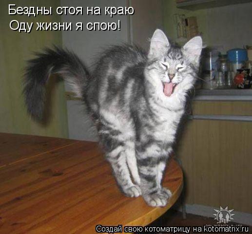 Котоматрица: Бездны стоя на краю Оду жизни я спою!