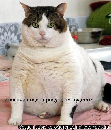 Котоматрица: исключив один продукт, вы худеете!