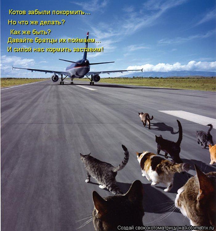 Котоматрица: Котов забыли покормить... Но что же делать? Как же быть? Давайте братцы их поймаем... И силой нас кормить заставим!