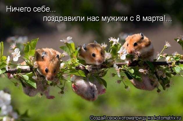 Котоматрица: Ничего себе...  поздравили нас мужики с 8 марта!...