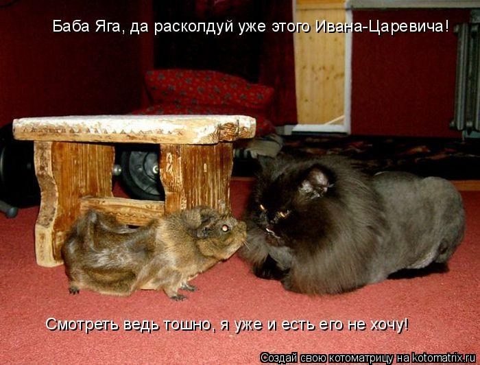 Котоматрица: Баба Яга, да расколдуй уже этого Ивана-Царевича! Смотреть ведь тошно, я уже и есть его не хочу!